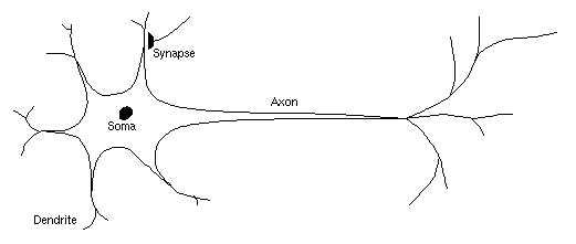bioneuron